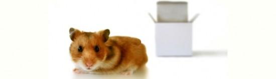 White-Box-Test-Techniques.-Branch.Decision-Testing