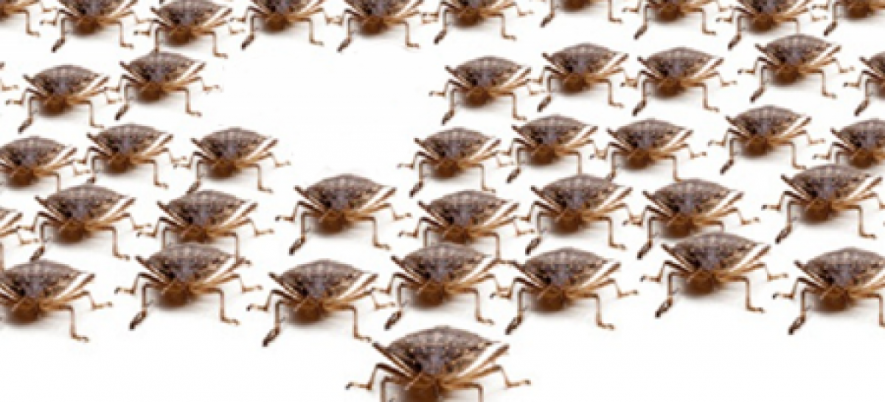 Why is it Important to Track Software Bugs Density?