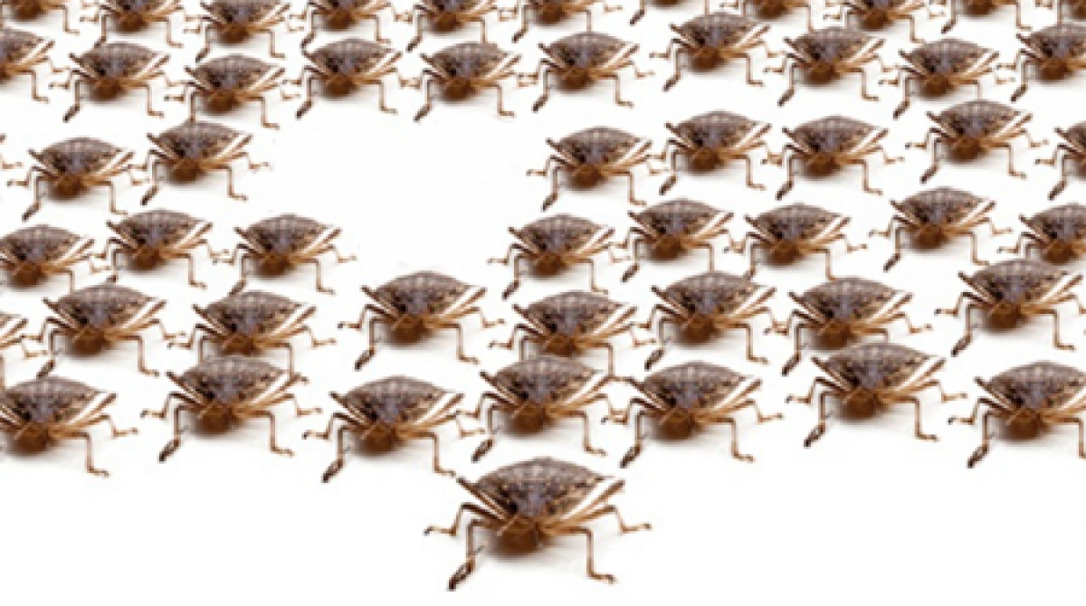Why to Track Software Bugs Density?
