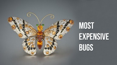 Most expensive bugs of 2016