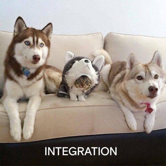 testing integration